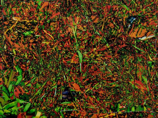 Vergiftigd gras –  Landschappen in de Stellingwerven